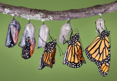 good-change-butterfly-lifecycle.jpg