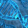 A kimondott szavaink ès a DNS