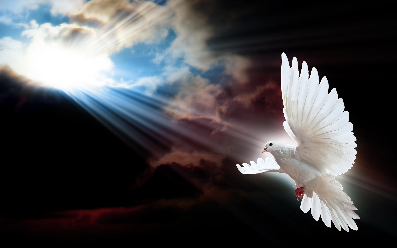 dove-doves-39875314-2880-1800.jpg