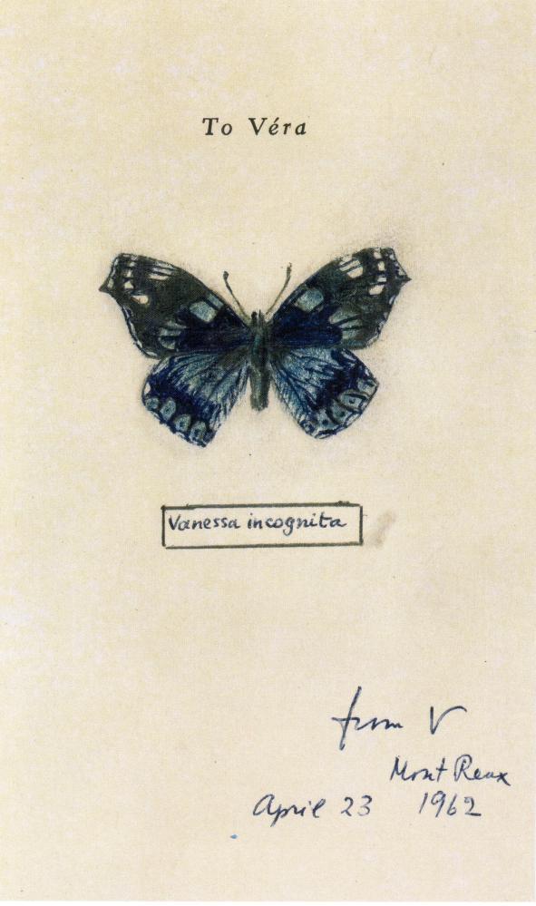 nabokov_butterfly.jpg