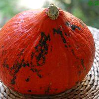 Az ősz első sütőtökkrém-levese – csuklókímélő módszerrel