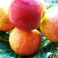 Könnyed, omlós almás pite karamellizált almával