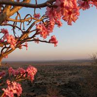 Kordofáni alkony