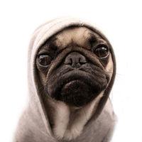 Gangszta kutyák