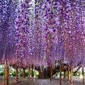 Csodás Ashikaga Virág park