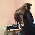 Az alvás mesterei, a macskák