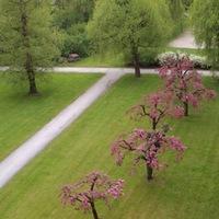 Az Ostoba Társadalom vonzereje a svájci kakukk fészkéből nézve