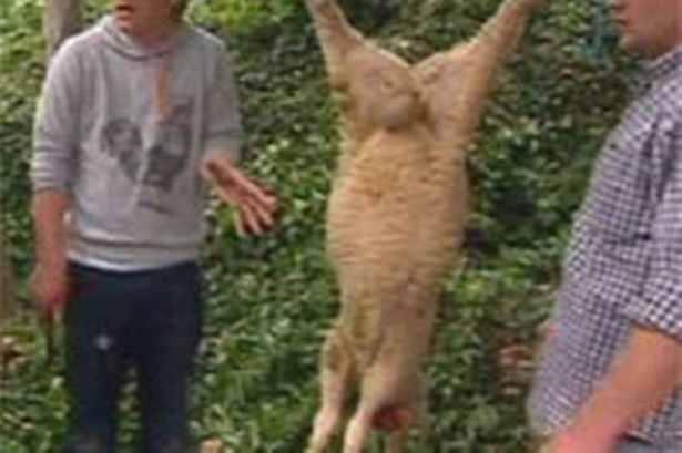 jamie killed lamb.jpg