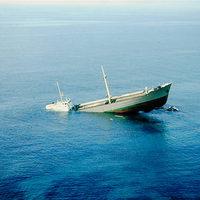 49. Elviscot - Elba sziget, Olaszország
