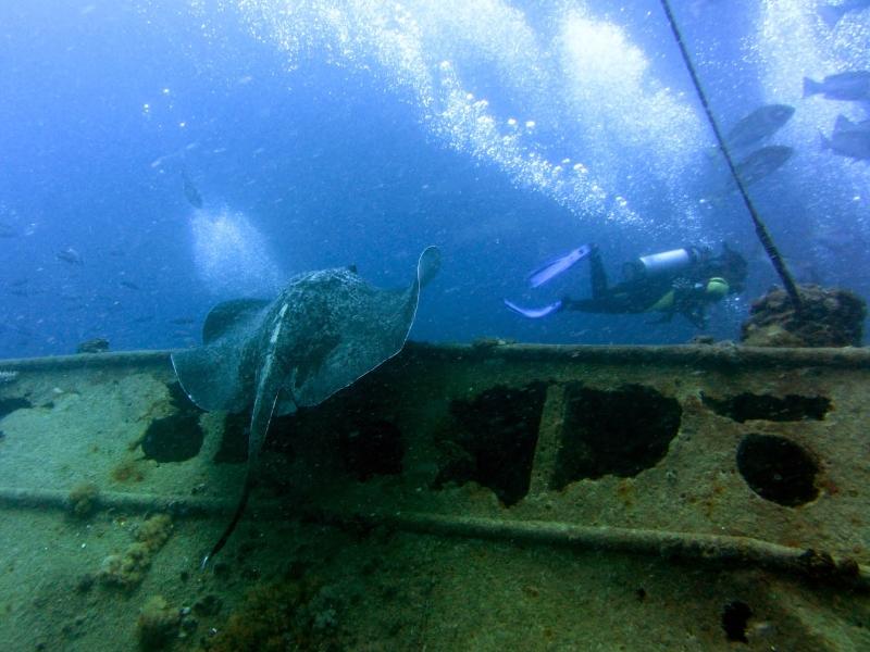 yongala-ray-diver.jpg