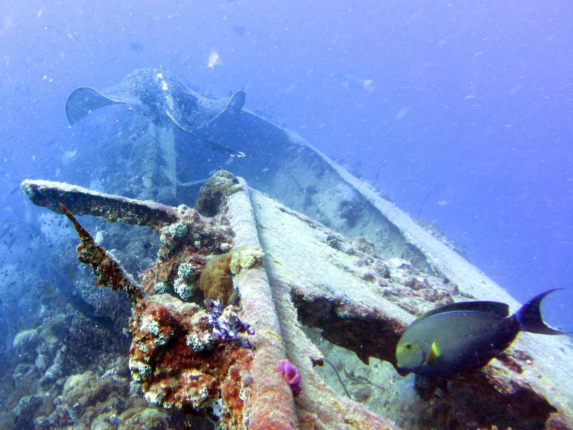 yongala-ship-wreck.jpg