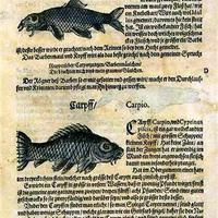Adam Lonicer - Kreuterbuch 1560