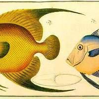 Tengeri halak - könyomat