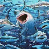 Színes cápák - giccs ?
