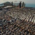 India betiltotta a cápauszony tengeren történő levágását!