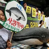 Dél-Korea megtalálta a kiskaput a bálnavadászati tilalomban