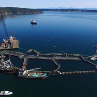 Washington állam betiltotta a ketreces nyílt vízi lazactelepeket