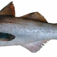 Egy kiló halra jutó környezetterhelés
