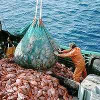 Szükség van a mélytengeri halászatra?