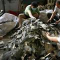 A szállítócégek tilalma megrázta Hong Kong cápauszony importját!