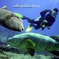 Több mint 4-szeresére emelkedett a halpopuláció egy mexikói tengeri védett területen