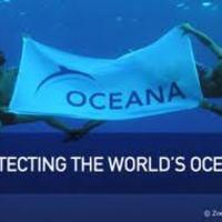 Az Oceana szerint jelentős fogáscsökkentésre lenne szükség a Balti-tengeren