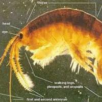 Az invazív fajok milliárdos károkat okoznak Nagy-Britanniának.