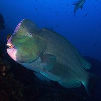 Halászati menedzsment egyszeregy: hiperstabilitás
