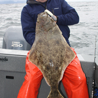 Izland betiltja az óriás laposhal fogását