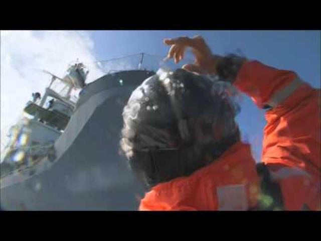 Sea Shepherd hírek már magyarul is