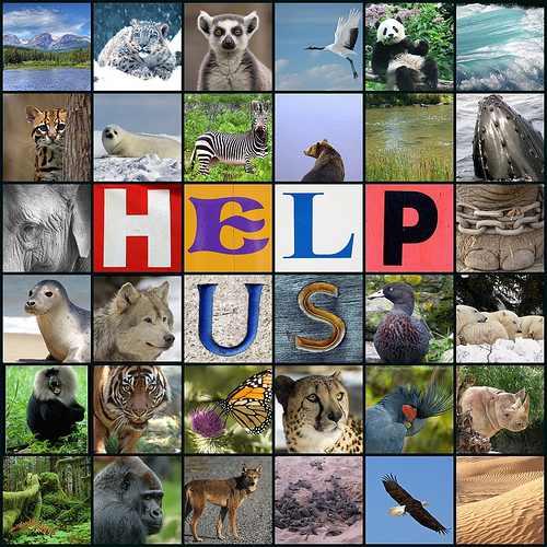 Endangered-species.jpg