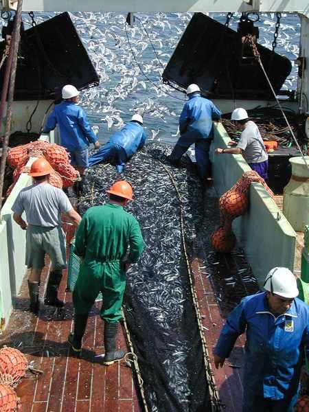 peruvian fishery.jpg