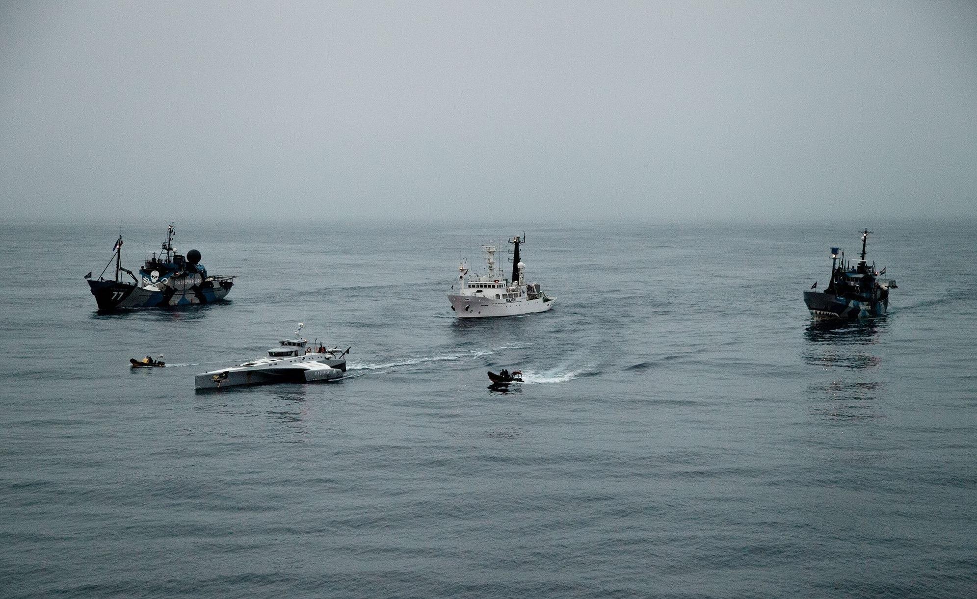 sea shepherd_1.jpg