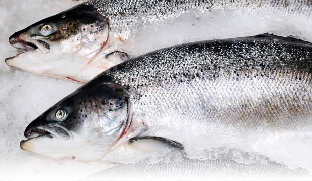 shop-whole-salmon.jpg