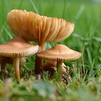 A nem mindennapi gombáink 1.