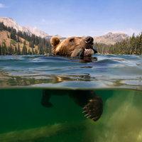 A halat a medve is szereti