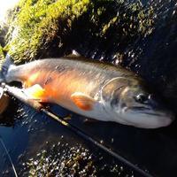 Ajánló: Grönland fishing
