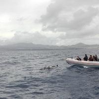 Bálnales hullámzó vízen: a tömény rémálom, amit valamiért eltitkol a világ