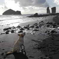Döbbenet! Kutyák ugatták az óceánt!