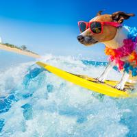 Vigyázzon, nem csak a szörfözéstől lehet szörfös a füle!