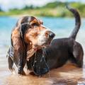 Fül van a vízben! Elkerülhető, hogy víz menjen a fülünkbe? És mi lesz a hallókészülékkel?