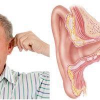 5 érdekesség a fülről és a hallásról