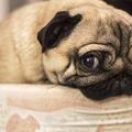 Amikor a kutya megette a hallókészüléket