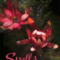 ,,DOC,, Spells (Wings Book 2). hotel Sapanca Codigo subtitle Ideales north Premium