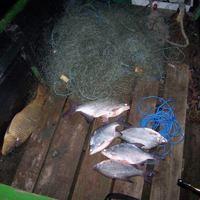 Orvhalász háló az Újpesti öbölben