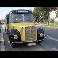 Öreg tuják és buszok Bécsből