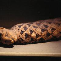 Mumifikált állatok is voltak a feltárt sírban