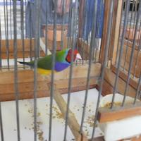 A madárkiállítás
