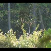 Szarvas vadászat videók