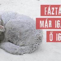 Több száz kutya fázik a hidegben!